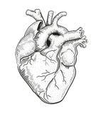 Coração a ilustração do vetor