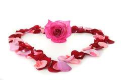 Coração, amor Imagem de Stock