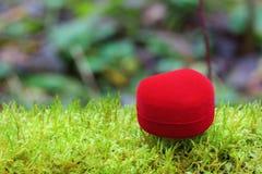 Coração bonito do dia de Valentim no musgo Foto de Stock Royalty Free