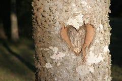 Coração cinzelado na árvore nas madeiras fotografia de stock