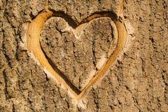 Coração cinzelado na casca. Fotos de Stock