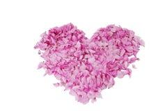 Coração com pétalas cor-de-rosa Foto de Stock