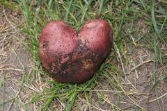 Coração cor-de-rosa da batata Fotos de Stock