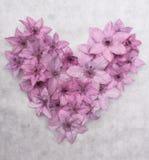 Coração cor-de-rosa no fundos cinzentos, coração do Valentim Fotos de Stock