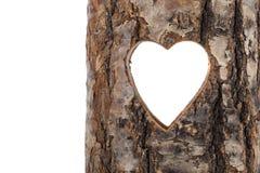 Coração cortado no tronco de árvore oca. Fotografia de Stock