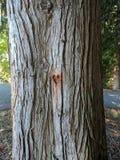 Coração da árvore fotografia de stock