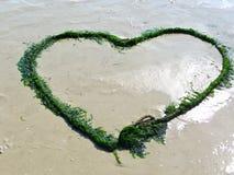 Coração da alga na praia Fotografia de Stock Royalty Free
