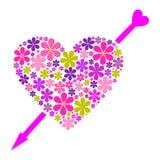 Coração da camomila Imagem de Stock Royalty Free
