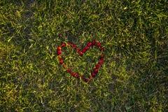 Coração da cereja na grama Imagem de Stock
