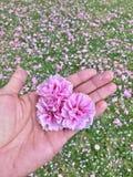 Coração da flor fotos de stock