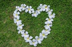 Coração da flor da grama. imagens de stock