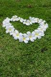 Coração da flor da grama. foto de stock royalty free