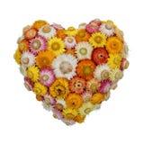 Coração da flor eterna Imagem de Stock Royalty Free