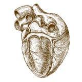 Coração da gravura no fundo branco Imagem de Stock Royalty Free