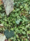 Coração da mãe Natureza Selvagem e vibrante Fotografia de Stock Royalty Free
