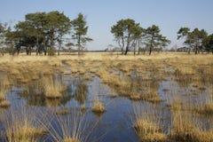 Coração da paisagem Foto de Stock Royalty Free