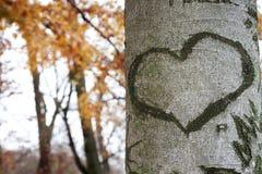 Coração dado forma marcado contra a casca de árvore foto de stock
