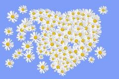 Coração das margaridas ilustração royalty free