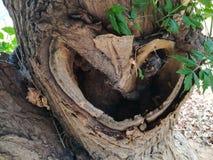 Coração das naturezas Foto de Stock Royalty Free