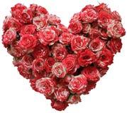 Coração das rosas pequenas isoladas imagem de stock