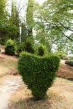Coração de arbustos do buxo Imagem de Stock Royalty Free