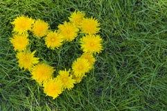 Coração de flores do dente-de-leão foto de stock