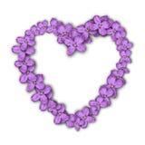 Coração de flores do lilac Cartão ao dia do ` s do Valentim Flores roxas Fotografia de Stock