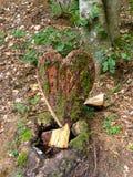 Coração de madeira no assoalho da floresta Imagens de Stock