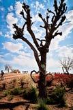 Coração de madeira que pendura em uma árvore fotografia de stock royalty free