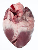 Coração de porco Fotos de Stock