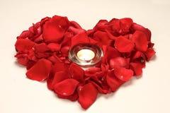 Coração de Rosa Imagens de Stock