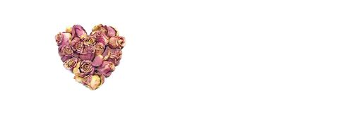 Coração de Rosa Foto de Stock Royalty Free