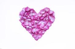 Coração de Rose Petals Imagem de Stock