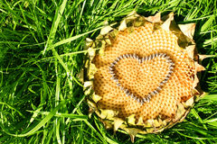 Coração de um girassol Fotos de Stock