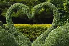 Coração do amor das cisnes do Topiary Imagens de Stock