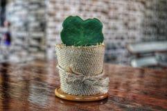 Coração do cacto de Hoya fotos de stock