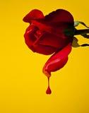Coração do gotejamento Fotografia de Stock