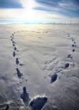 Coração do inverno Imagens de Stock