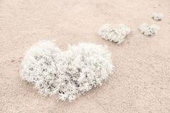 Coração do musgo na areia imagens de stock