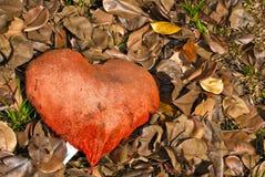 Coração do outono Fotos de Stock