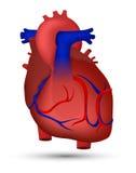 Coração do ser humano Ilustração Stock