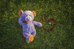 Coração do urso e da cereja Retrato doce Imagens de Stock