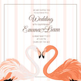 Coração dos pares do flamingo do convite da cerimônia de casamento Imagens de Stock