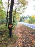 Coração e árvore ao lado da estrada do outono imagem de stock