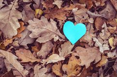 Coração e natureza verdes Imagens de Stock