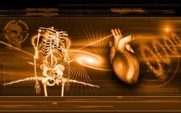 Coração e Skelton ilustração stock