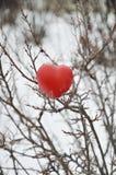 Coração em um arbusto Imagens de Stock Royalty Free