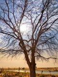 Coração em uma árvore fotografia de stock royalty free