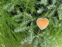 Coração feito à mão de feltro como a decoração de um ramo conífero verde Fotos de Stock Royalty Free