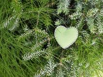 Coração feito à mão de feltro como a decoração de um ramo conífero verde Imagens de Stock